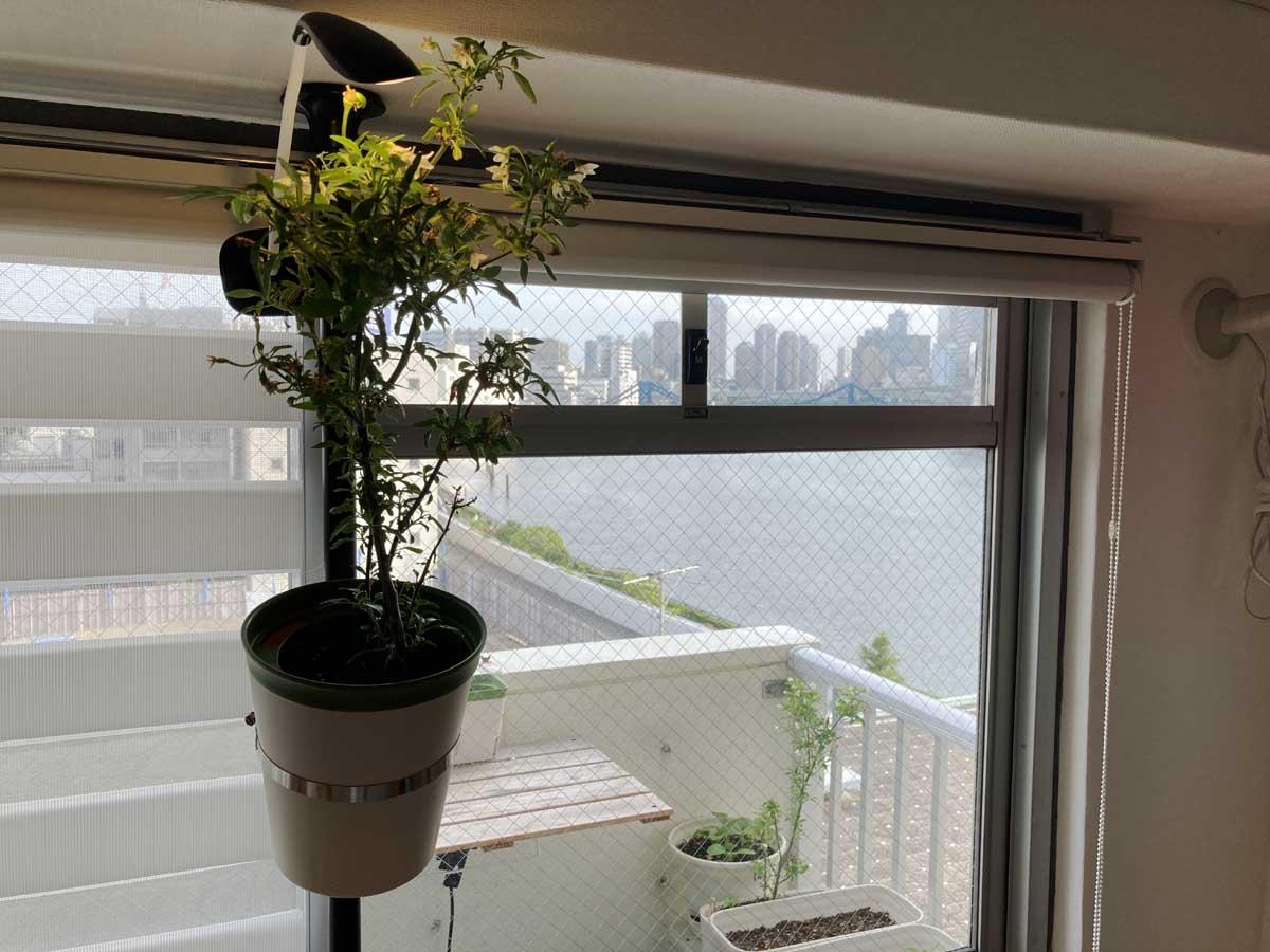 植物を宙に浮かせる