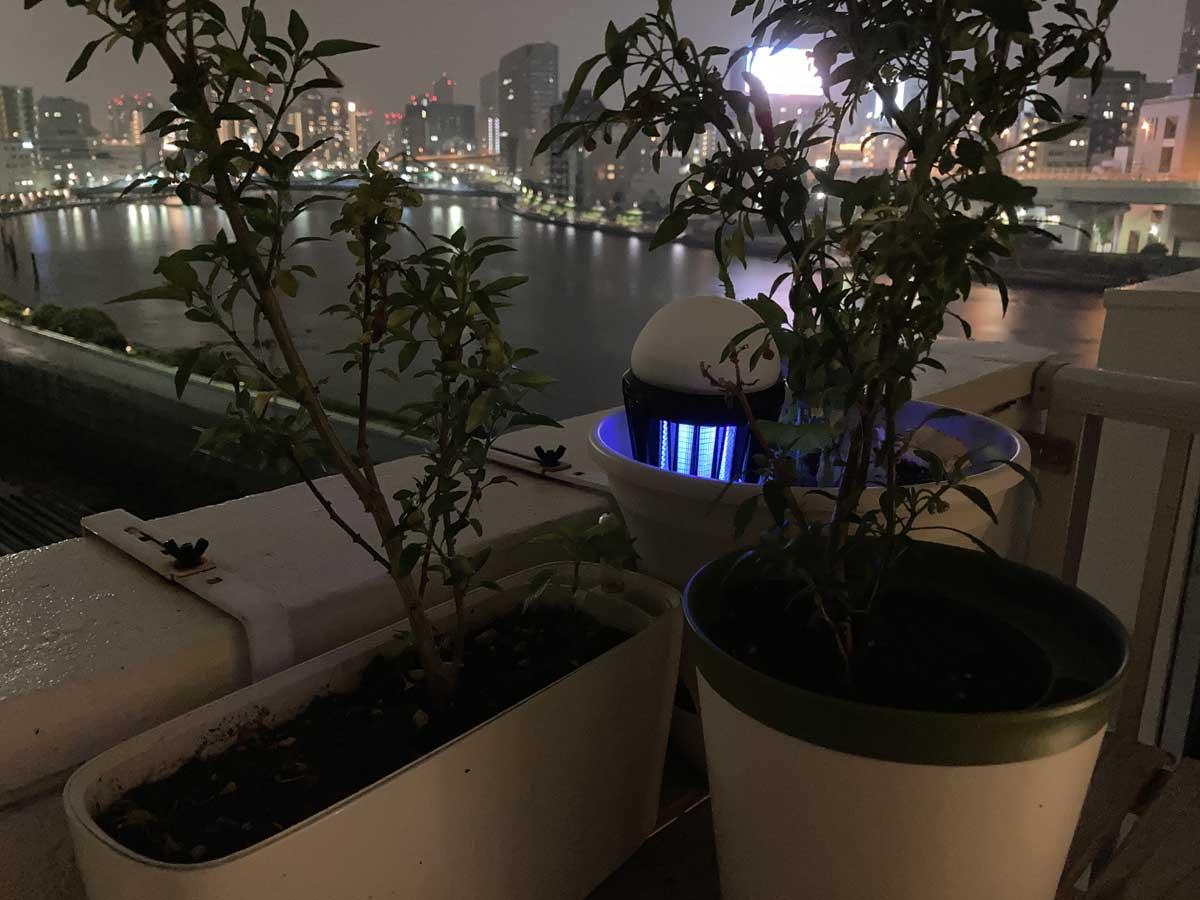 羽虫が出た観葉植物などの植木鉢に、一晩直接つきさす使用法