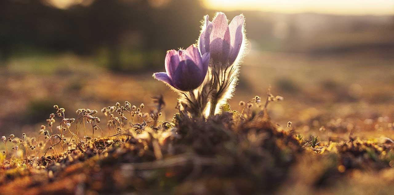 花の栽培は初心者ベランダガーデニングむき