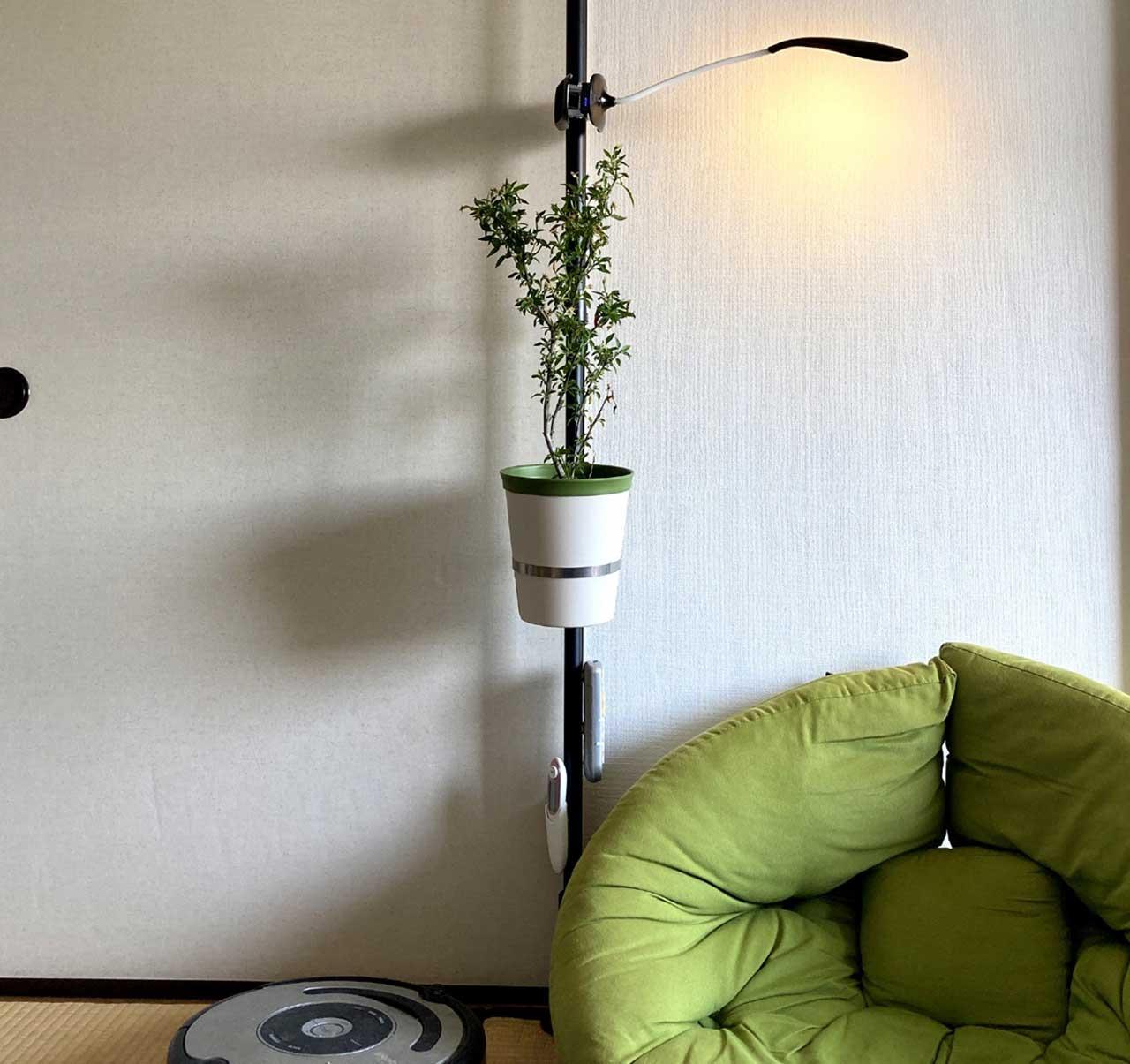 観葉植物、室内植えにもぴったり